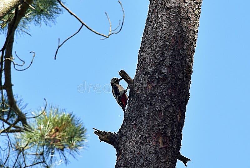 在树的分支的鸟 库存照片