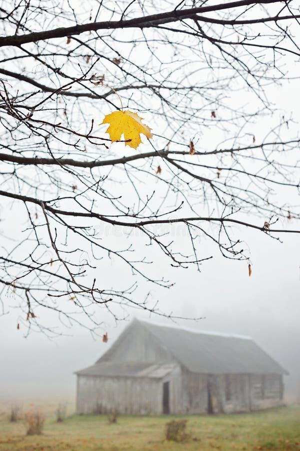在树的前枫叶 免版税库存照片