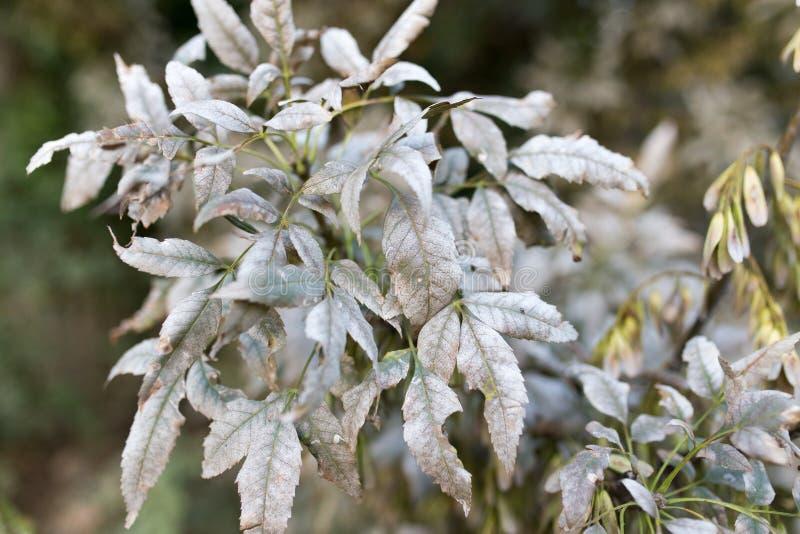 在树的叶子的疾病 免版税库存照片