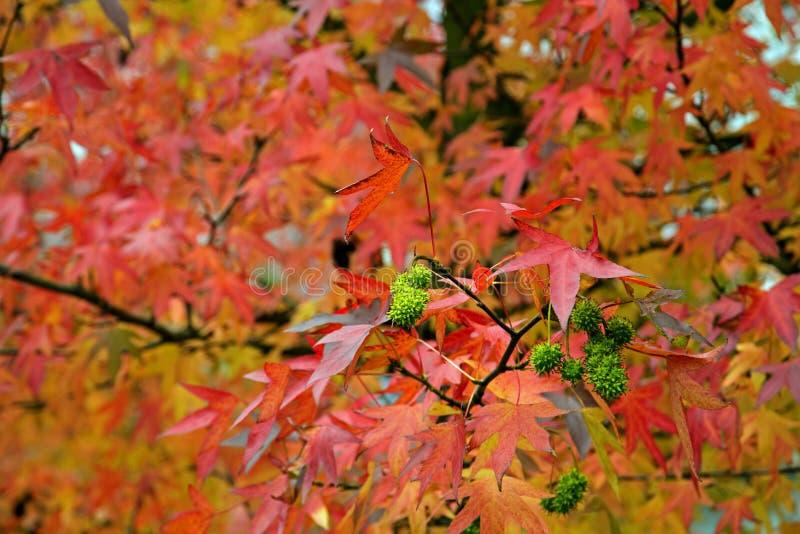 在树的叶子的秋天颜色 库存图片