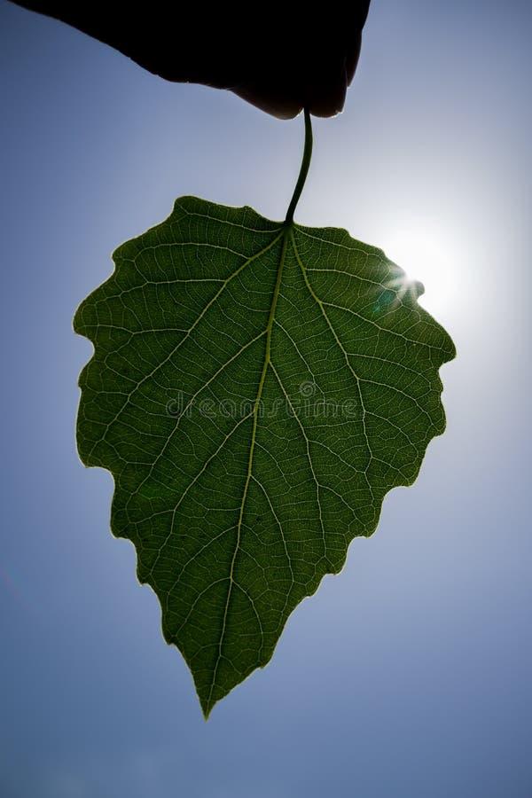 在树的叶子 免版税库存照片