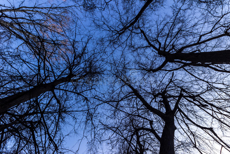 在树的天空 库存照片