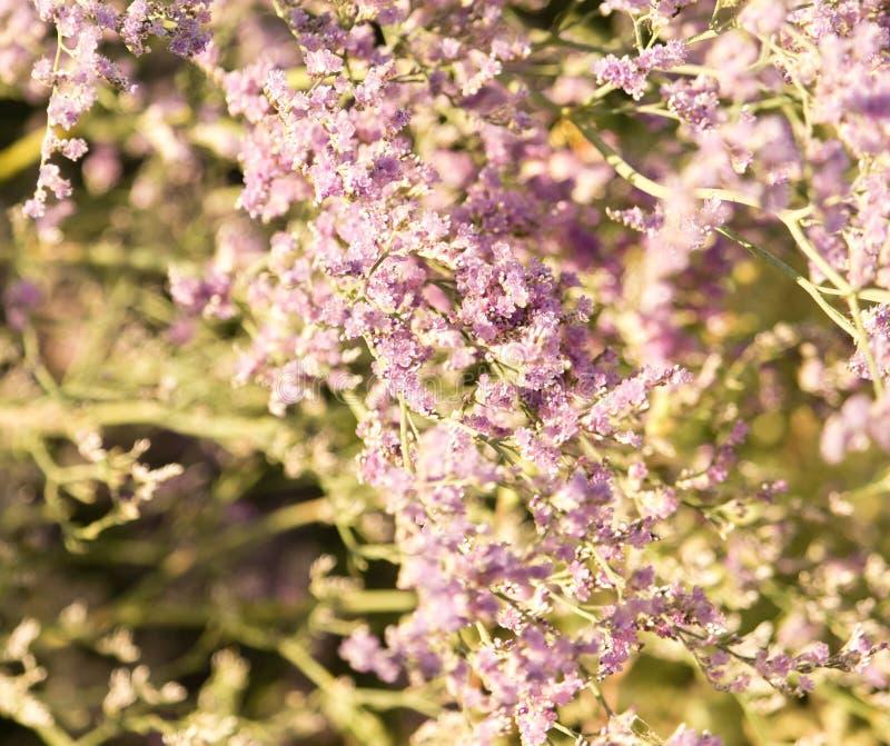 在树的小紫色花 免版税库存照片