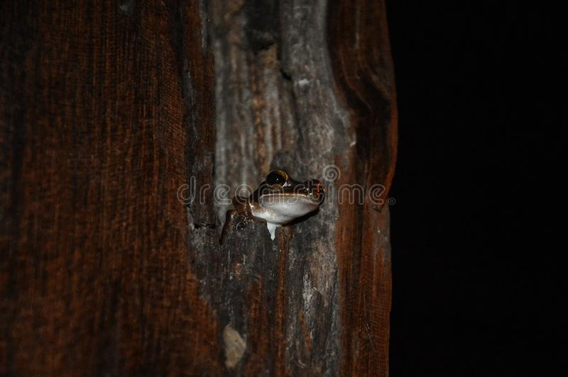 在树的小逗人喜爱的青蛙 免版税库存图片