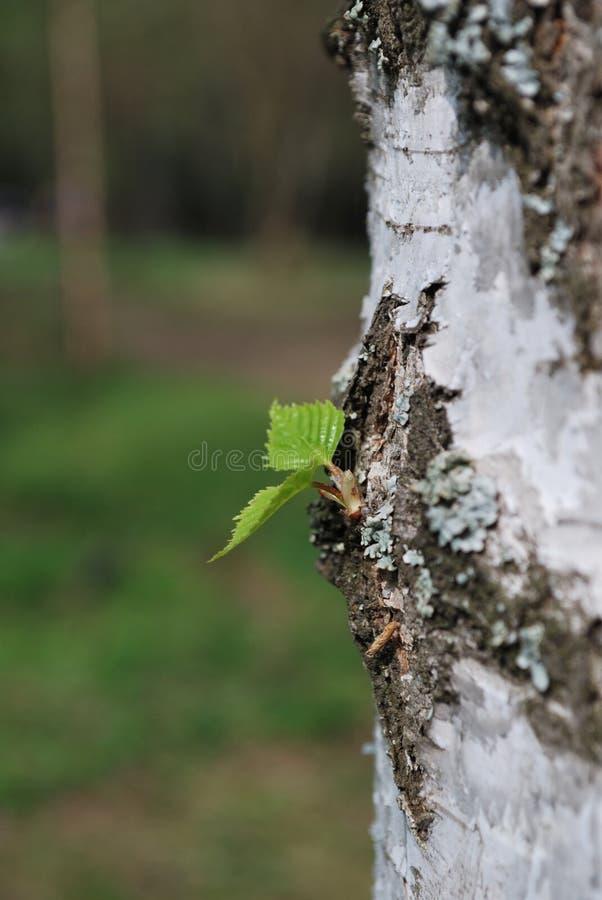 在树的小绿色叶子 库存图片
