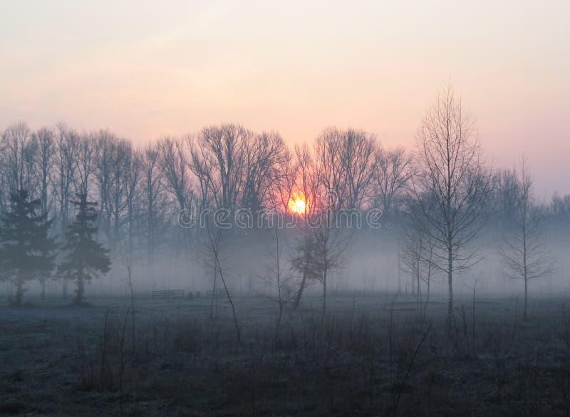 在树的日出在公园 在早晨阴霾的树 长凳倒空公园 库存照片