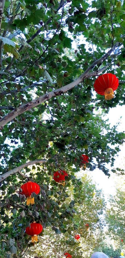 在树的日本装饰 库存照片