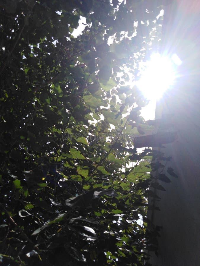 在树的日落 免版税图库摄影