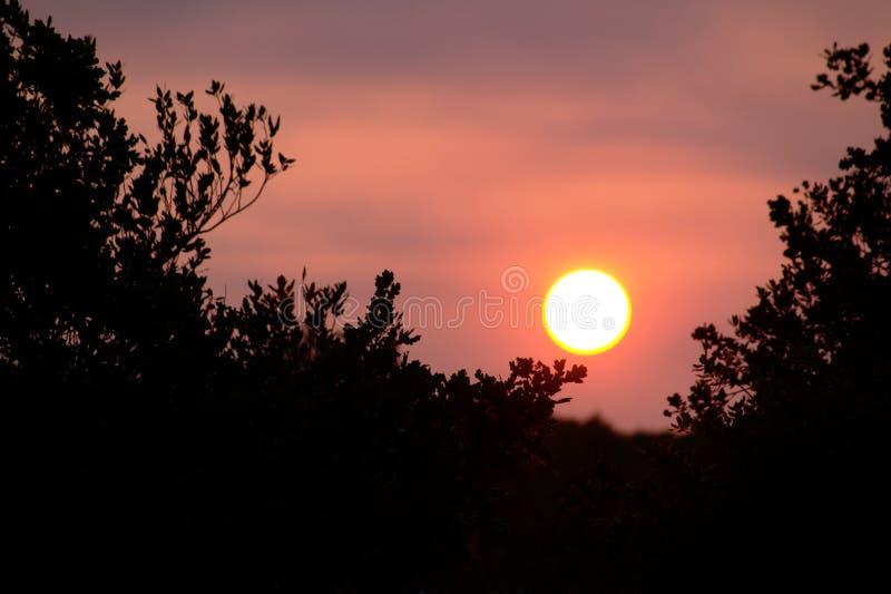 在树的日落 库存照片