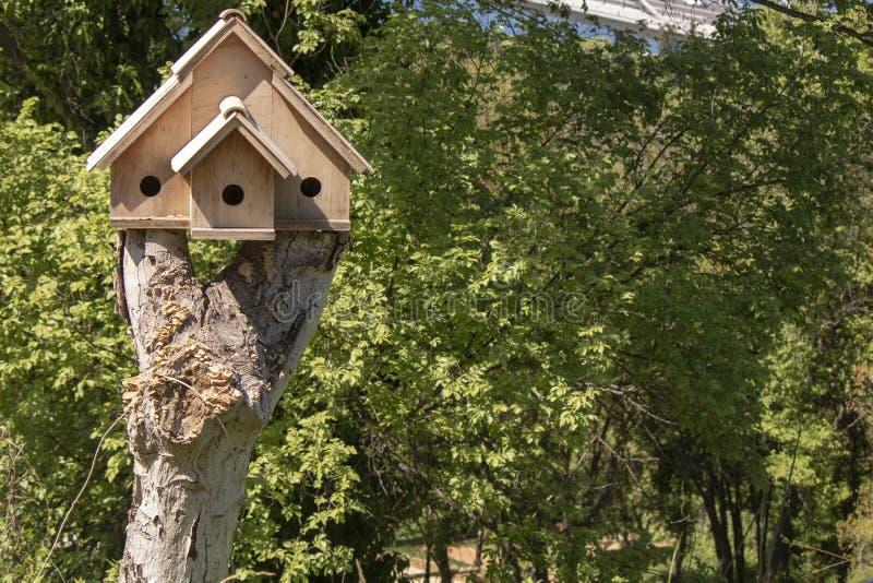 在树的木鸟舍 库存照片