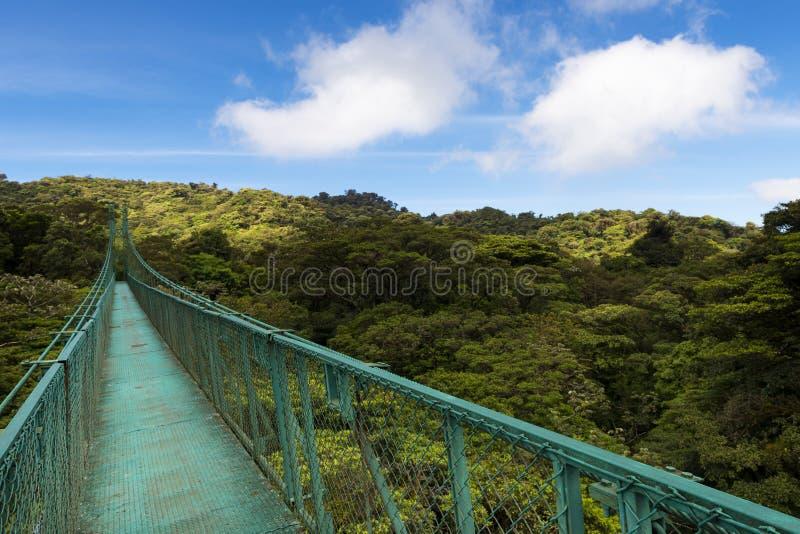 在树的机盖的暂停的桥梁在Monteverde,哥斯达黎加 免版税库存图片