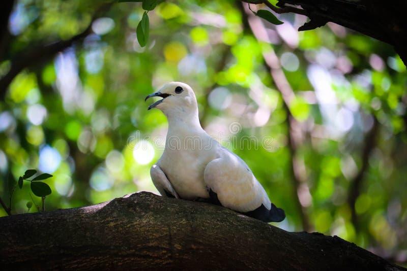 在树的染色皇家鸽子 免版税库存图片