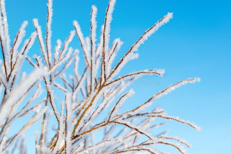 在树的树冰,冬天背景,小景深 免版税图库摄影