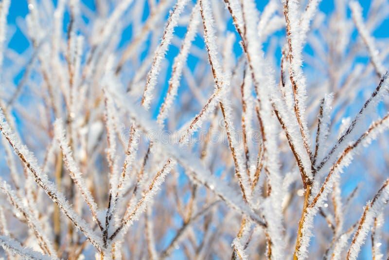 在树的树冰,冬天背景,小景深 库存照片