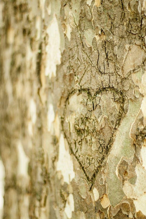 在树的树干刻记的心脏 免版税库存图片