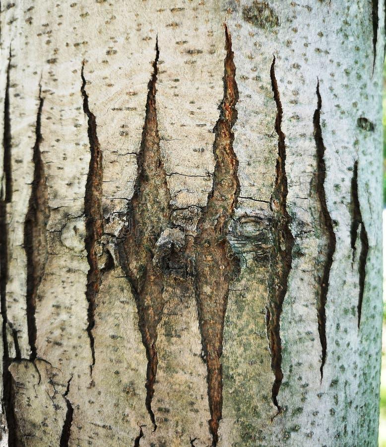 在树的树干的有些条纹 免版税库存照片