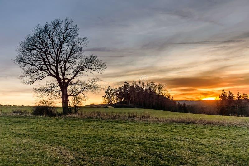 在树的梯子 图库摄影