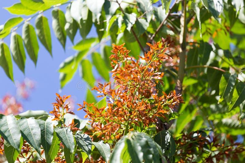 在树的橙色花 图库摄影