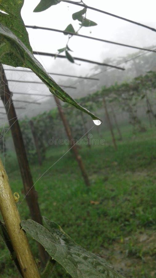 在树的水 免版税库存图片
