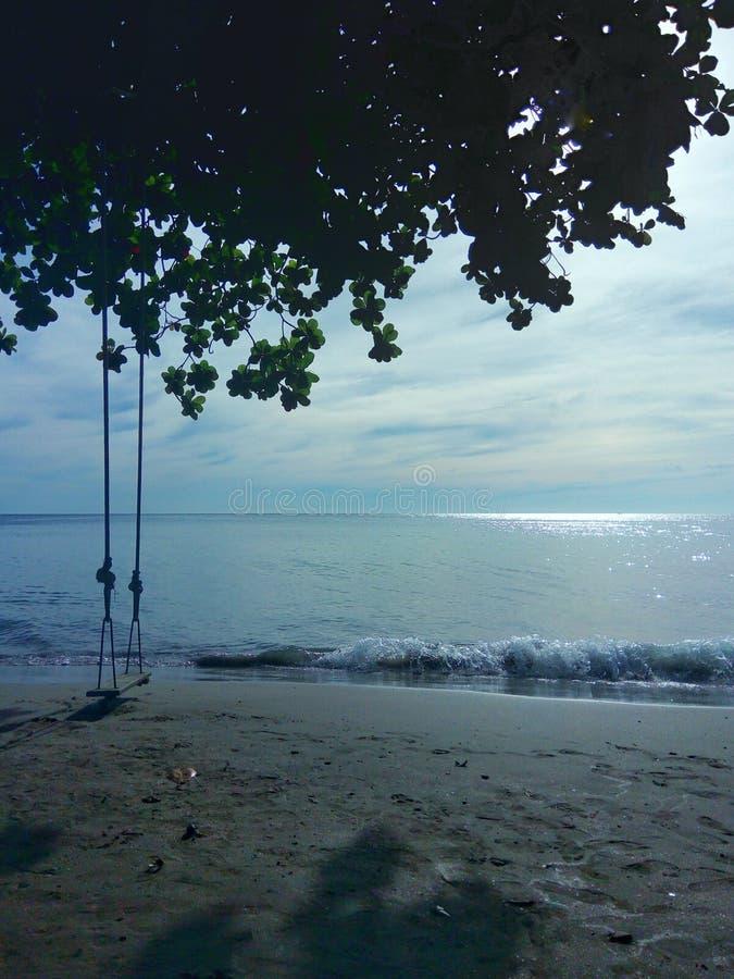 在树的海滩摇摆 库存图片