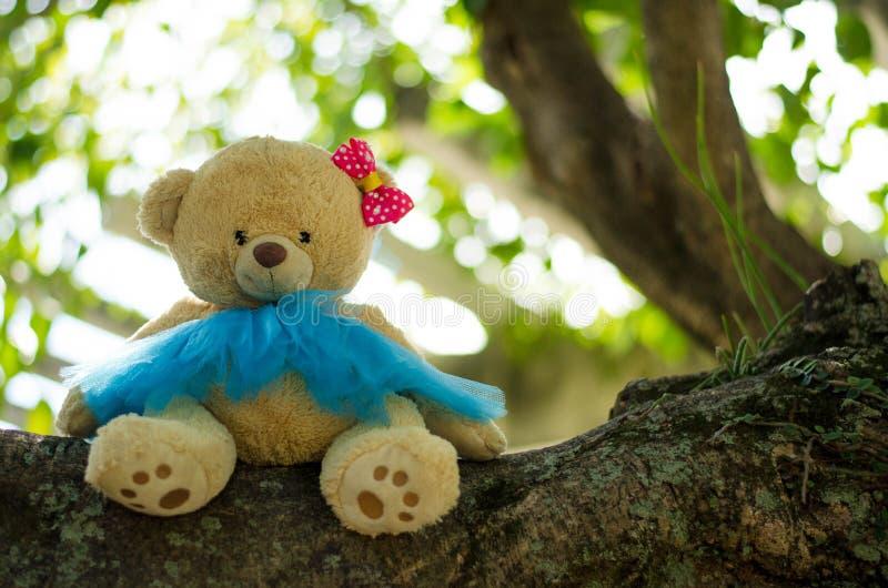 在树的熊玩偶 库存图片
