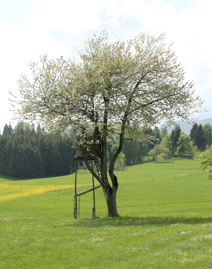 在树的狩猎棚子 库存图片
