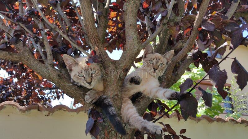 在树的猫 免版税库存图片
