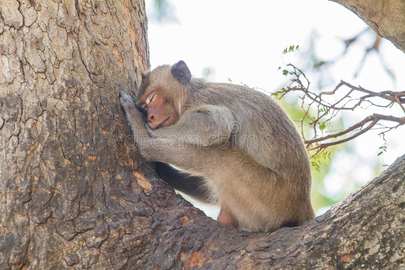 两性知识猴子上树_两性生活知识_高中生物细胞知识树