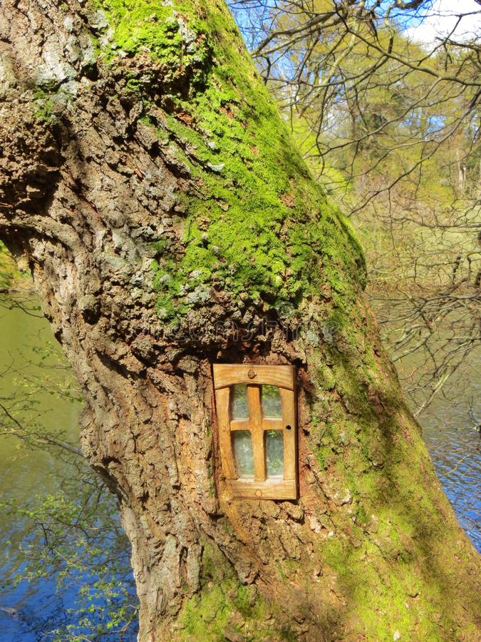 在树的窗口 免版税库存图片