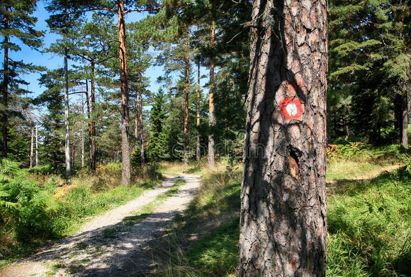 在树的红色和白色圆标记 免版税库存图片