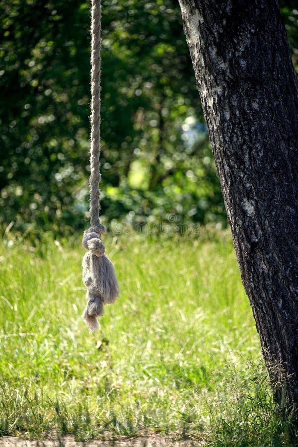 在树的自创摇摆绳索 免版税库存照片