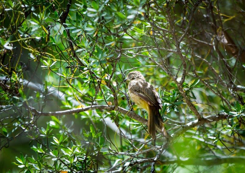 在树的自然brid 库存照片