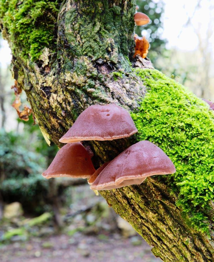 在树的蘑菇 免版税库存照片