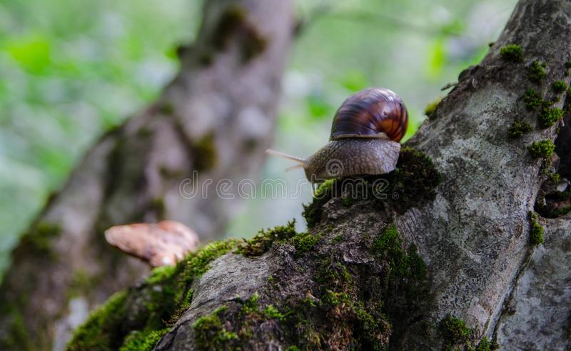 在树的蜗牛用蘑菇 免版税库存照片