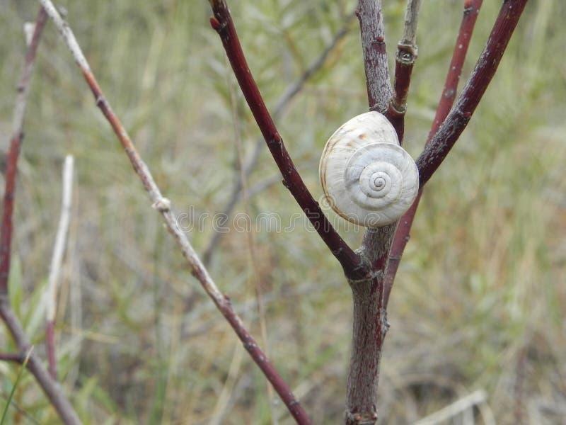 在树的蜗牛 免版税库存图片