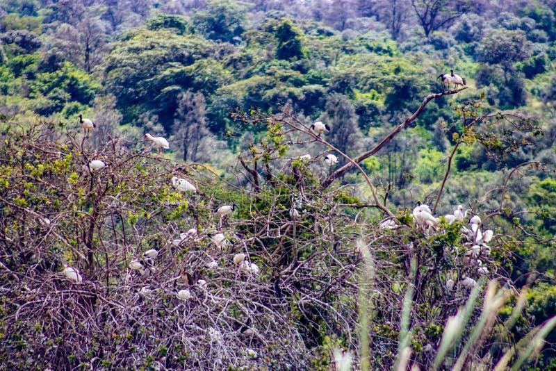 在树的许多鸟 免版税库存图片