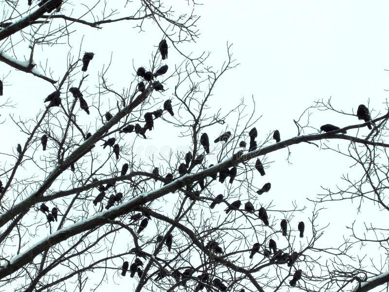 在树的许多鸟 免版税库存照片