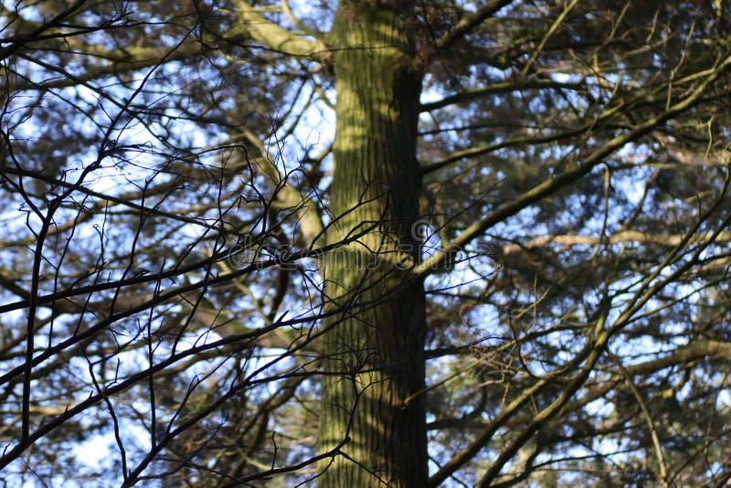 在树的阴影 免版税库存图片