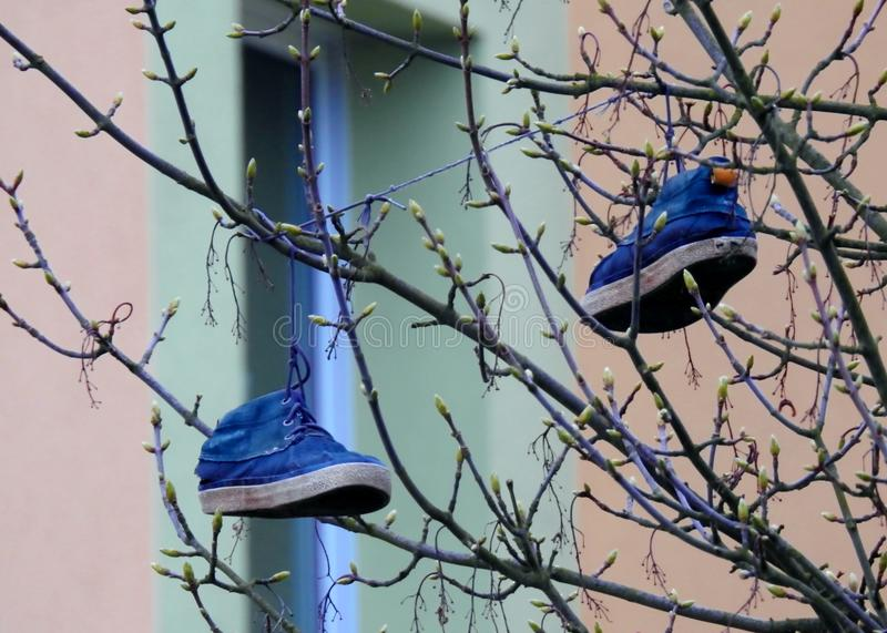 Download 在树的鞋子 库存图片. 图片 包括有 停止, 子项, 装饰, 结构树, 鞋子, 蓝色, 春天 - 72362071