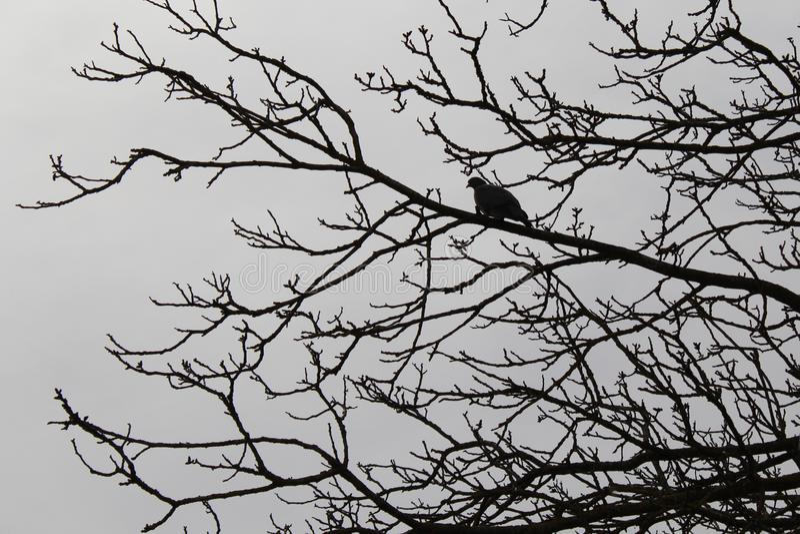 在树的鸠 免版税库存图片
