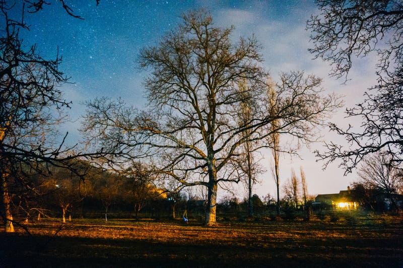 在树的满天星斗的天空在庭院里 免版税库存照片