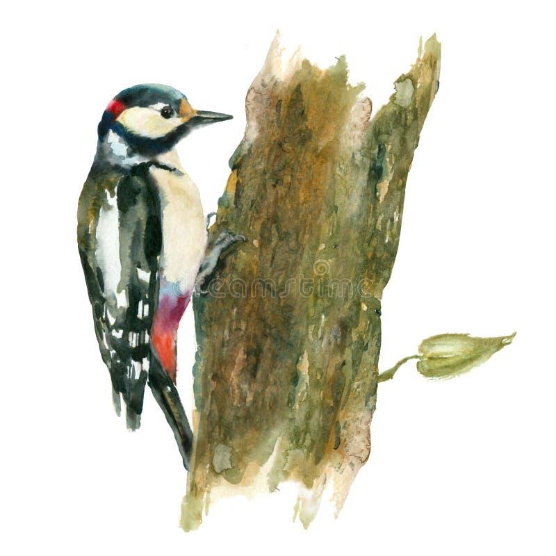 在树的水彩鸟 库存例证