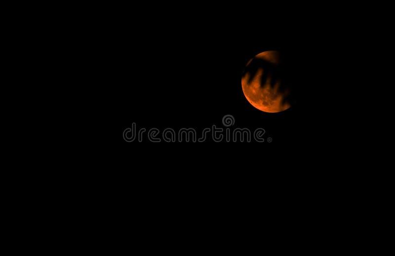 在树的阴影的红色月亮 库存照片