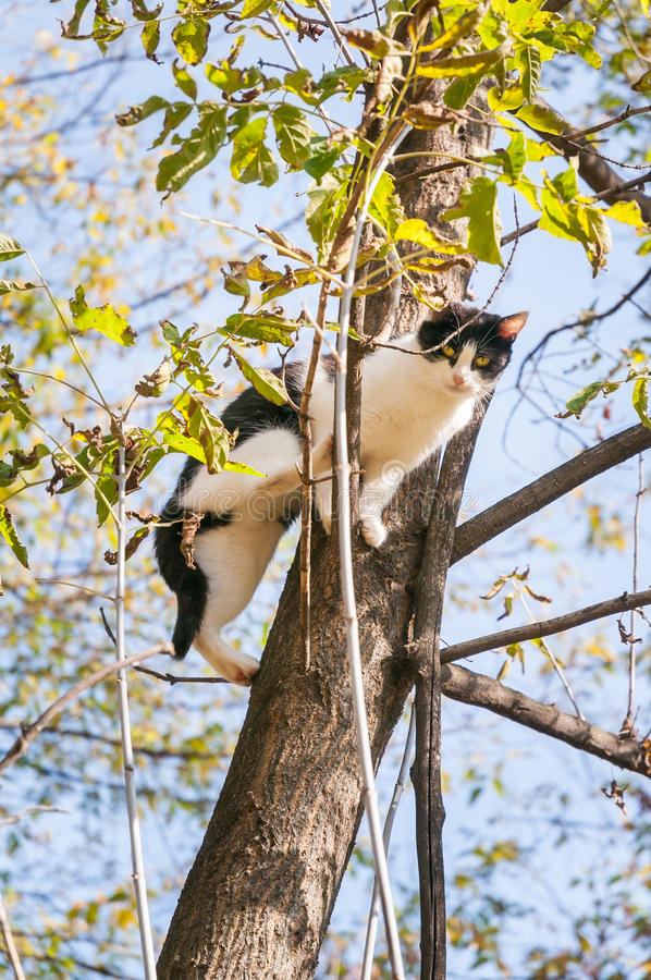 在树的黑白猫 免版税库存照片