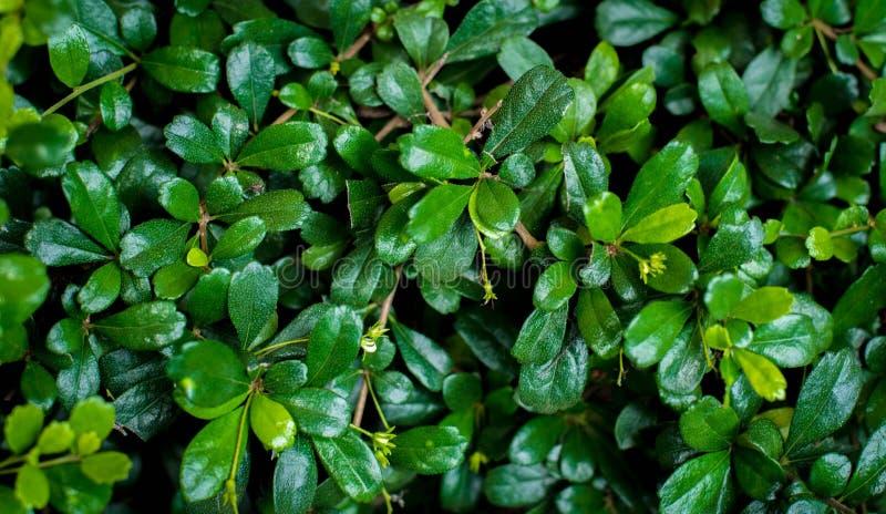 在树的绿色叶子 库存图片