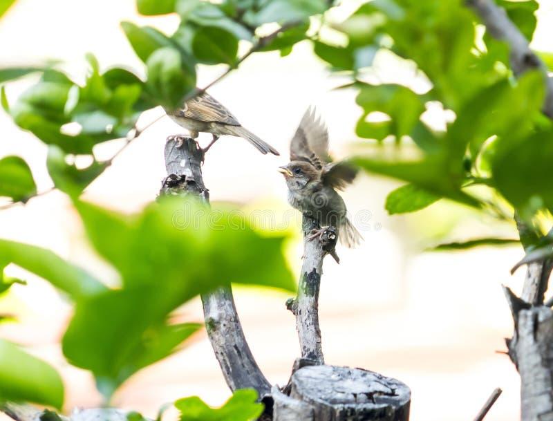 在树的麻雀 库存图片