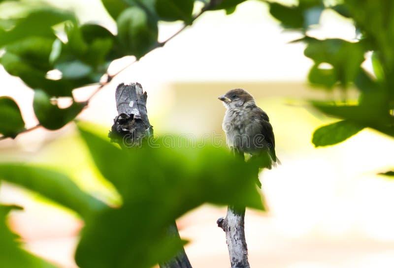 在树的麻雀 免版税库存照片
