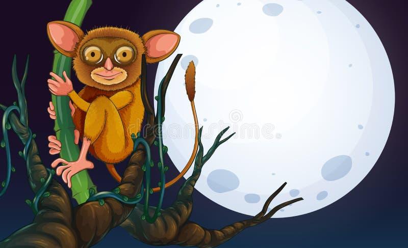 在树的Tarsier在晚上 库存例证