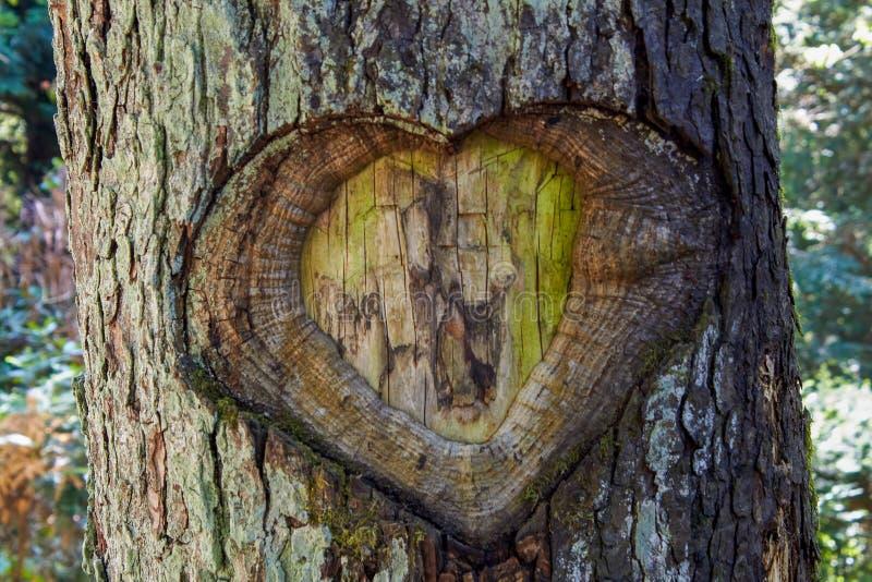 在树皮的心脏 免版税库存图片