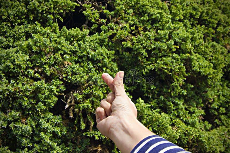 在树背景的微型心脏标志 图库摄影